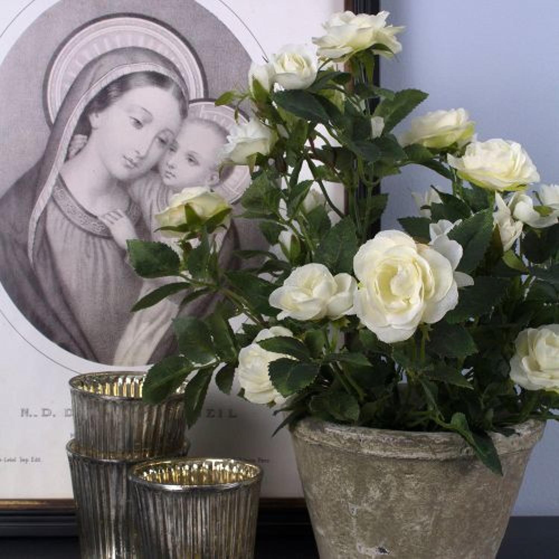 Rose pot in white