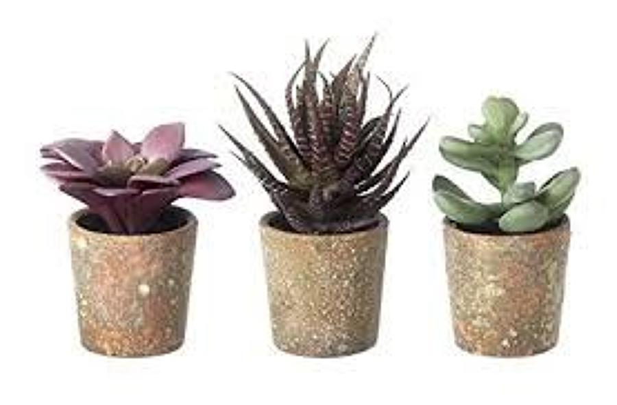 Succulents Potted - 3 assorted faux plants